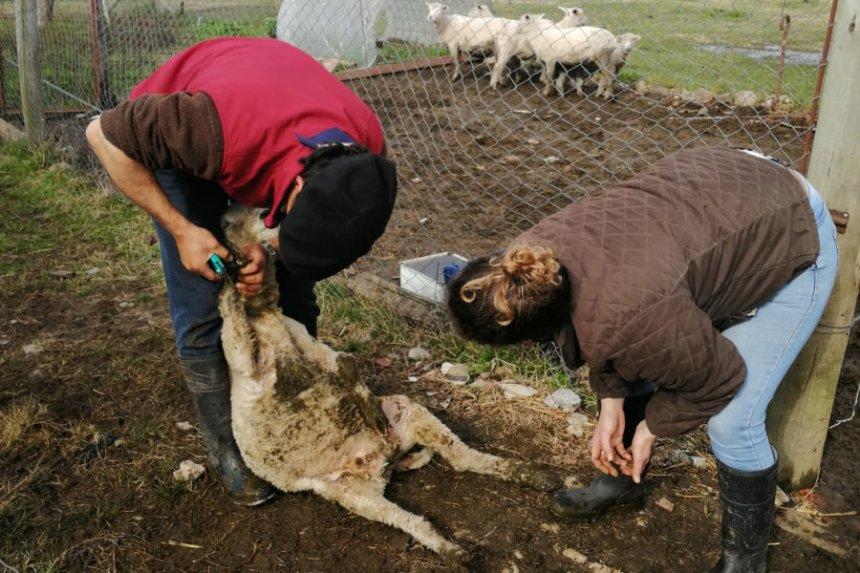 Técnicos visitan a productores rurales en el marco del convenio MIDES – Corriedale