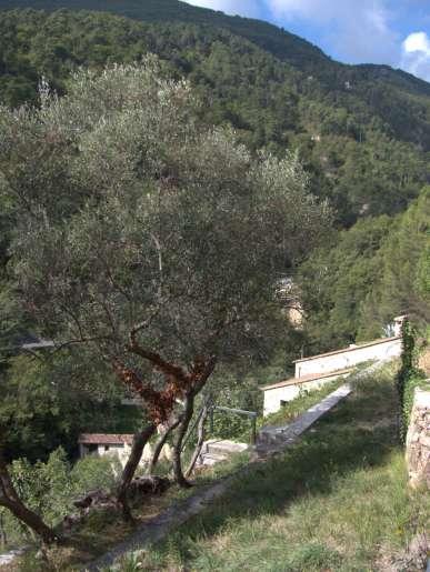 jardin_Castel_951