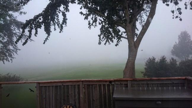 Dimman ligger tät.