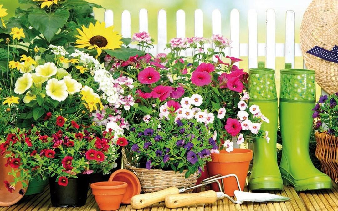 Concours des Jardins & Balcons fleuris