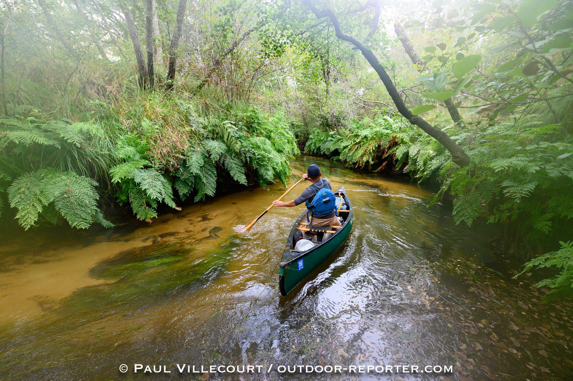 La Leyre : rivière la plus sauvage de France ?