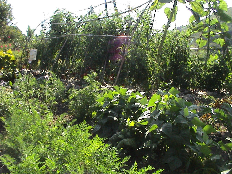 ete2009enfants jardins 042