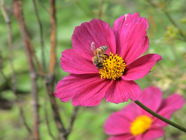 jardin octobre 054