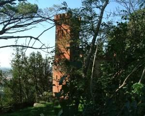 au milieu de la végétation la tour