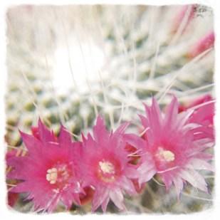 cactusen flor