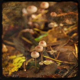 petits-champignons