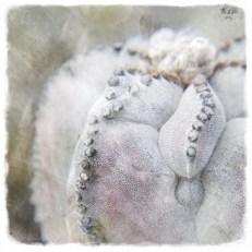 puntitos (cactus)