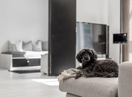 Koira ja asuntokaupat