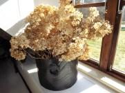 8. Kuivanud hortensiaoksad