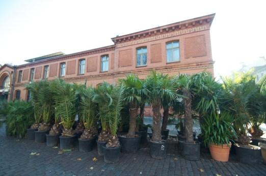 Geparkte Palmen vor der Halle