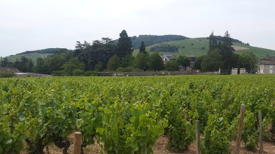 Le Mont Brouilly - Beaujolais