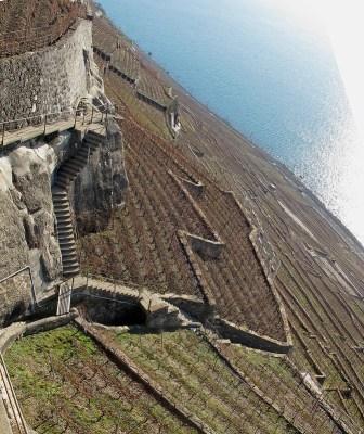 Vignoble en pente de Lavaux - Suisse - Terroir pente