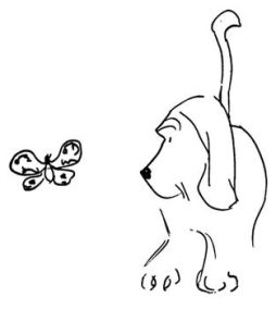 thurber_dogbutterfly