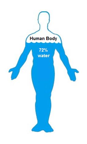 Image result for water in the body
