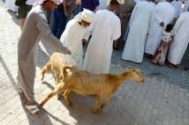 Nizwa, Sultanate of Oman 2013 - for Tourist Austria International