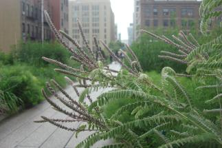 The High Line, New York, June 2015-26