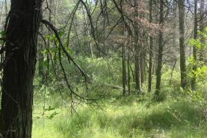 Pine Barrens & Native Orchids August 2015-12
