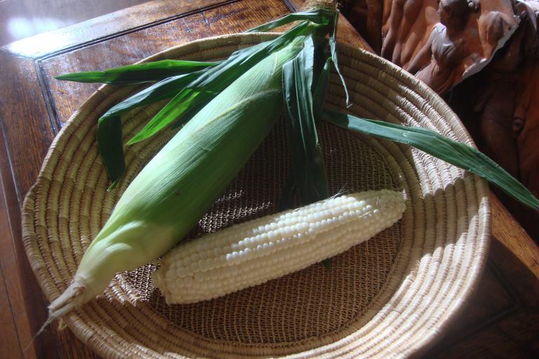 Corn 1-1