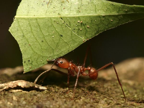 Life Lessons You Can Learn From The Ant 2
