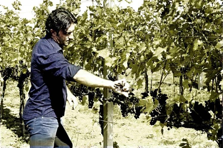 Vincenzo Cianfagna in his Vineyard in Molise checking Tintila Vines