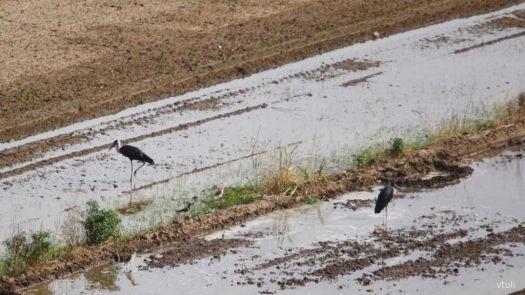 Stork - Birding Diary - 2