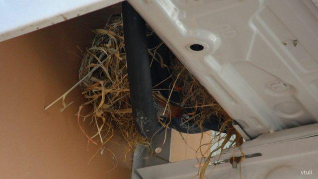 Munia's Nest - Birding Diary - 2