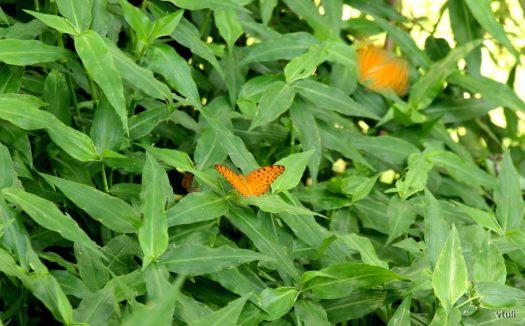 Butterflies - Butterfly Park Chandigarh