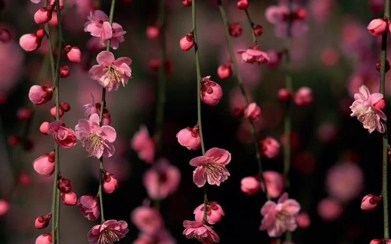 Photos-of-Sakura-vinegret (10)