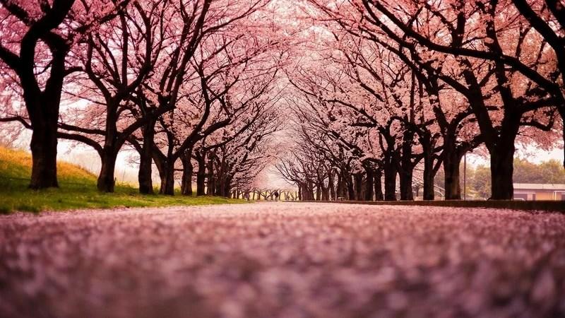 Photos-of-Sakura-vinegret (12)