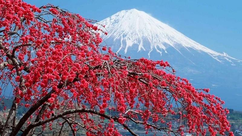 Photos-of-Sakura-vinegret (18)