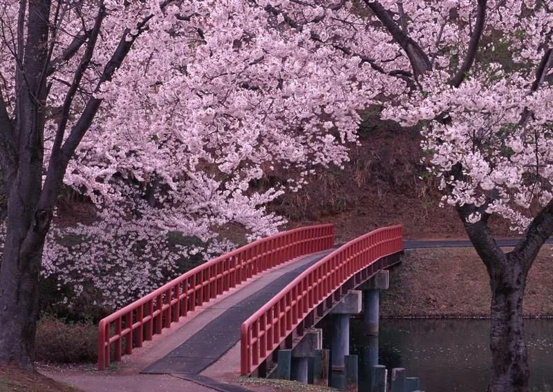 Photos-of-Sakura-vinegret (20)