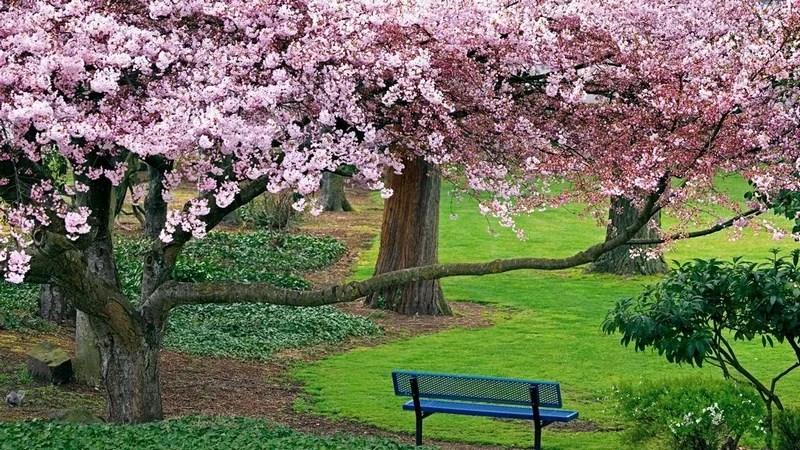 Photos-of-Sakura-vinegret (3)