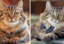 Вельвет — самый старый кот в мире, ему аж 26 лет!