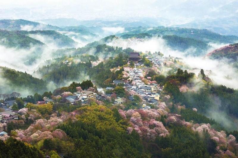 National-Geographic-cvetenie-sakuri-vinegret (3)