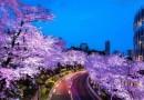 Эти фотографии японской сакуры, от National Geographic, способны пленить любого человека своей красотой.