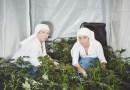 Монахини выращивают марихуану.