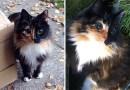 Слепая кошка, с удивительными глазами, нашла себе дом…