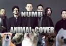 Видео: Животные исполняют известную композицию группы Linkin Park.