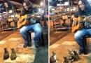 Видео: Уличный музыкант собрал необычных слушателей.