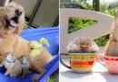 Эти очаровательные луговые собачки любят проводить время со своими друзьями животными.