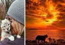 Instagram-аккаунт «Camping With Cats» вдохновит вас отправиться в поход с вашей кошкой.