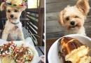 Попай — пес, который знает толк в еде.