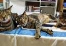 Никто не хотел забирать из центра для животных 3-х слепых кошек, пока одна добрая женщина не согласилась приютить их у себя…