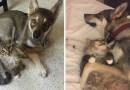 Эта хаски нашла себе друга в приюте для животных.