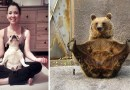 20 животных, которые занимаются йогой лучше, чем вы.