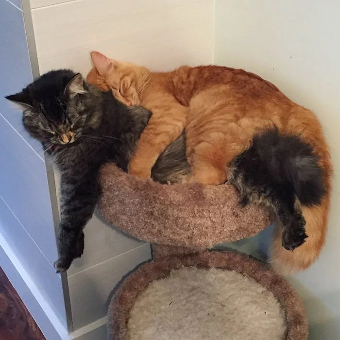 cats-sleeping-together-before-after-growing-up-renley-lili-vinegret (6)