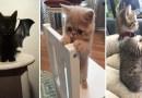 Подборка фотографий с самыми симпатичными котятами в мире.
