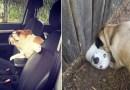 20 отчаянных собак, которые просто захотели поздороваться.