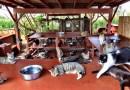 Люди со всего мира приезжают на Гавайи, чтобы погладить кошек в специально оборудованном для них месте.