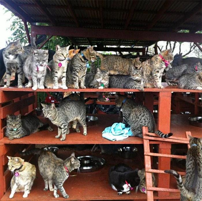 lanai-cat-sanctuary-hawaii-vinegret (11)